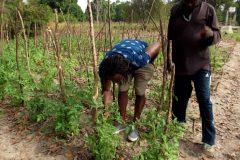 Un tour à Bignona, Casamance 2