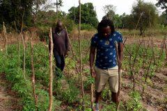 Un tour à Bignona, Casamance 4