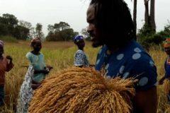 Un tour à Bignona, Casamance 5