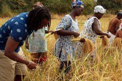 Un tour à Bignona, Casamance 8
