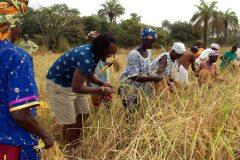 Un tour à Bignona, Casamance 14