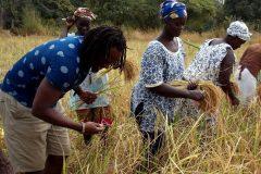 Un tour à Bignona, Casamance 15